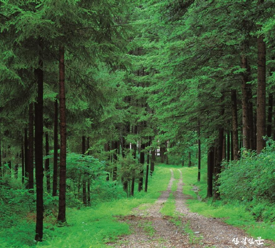 홍릉숲사진.jpg