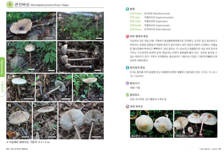 02.독버섯도감 책내용.jpg