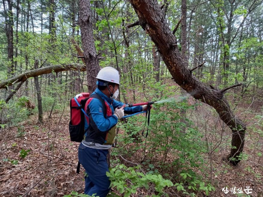 [관련 사진 3]산림내 물리적(살수) 방제.jpg