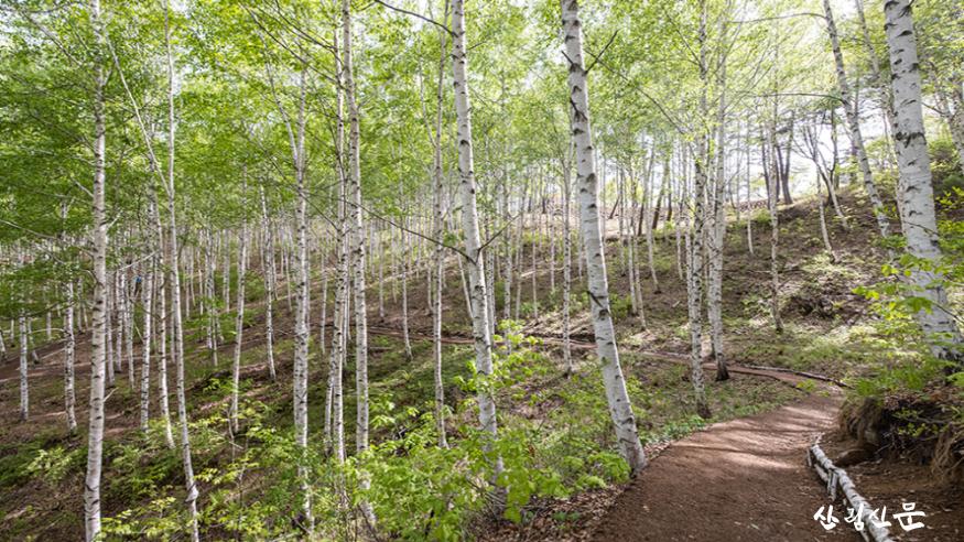 [크기변환]자작나무숲 풍경(1).png