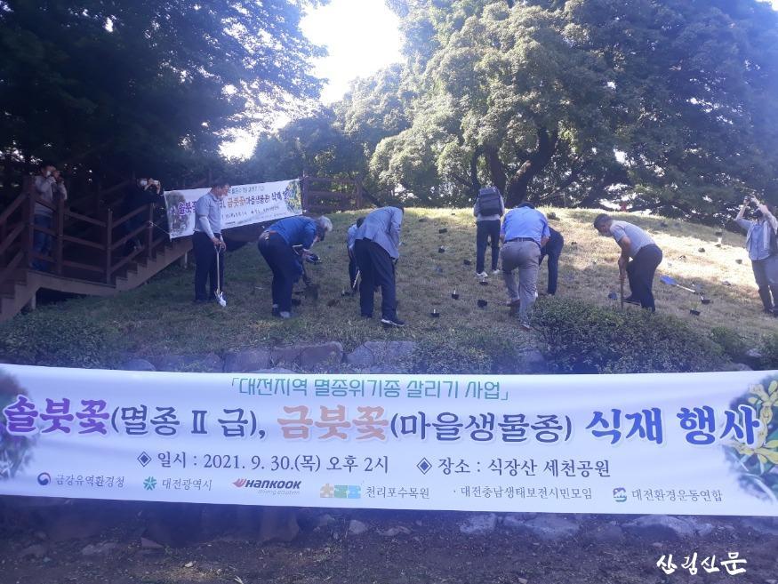 대전시, 멸종위기종'솔붓꽃 ㆍ 금붓꽃'복원 나섰다04.jpg